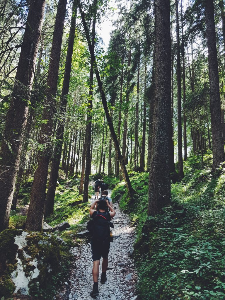 picture of hikers on a forest path, tall green trees, moss and other green growth.