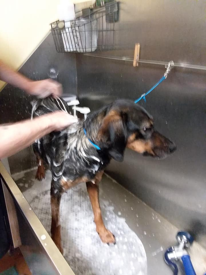 picture of a black and an dog getting a bath at a groomer's